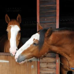 Two horses touching noses