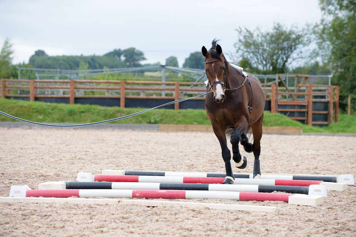 lungeing horse over trotting poles
