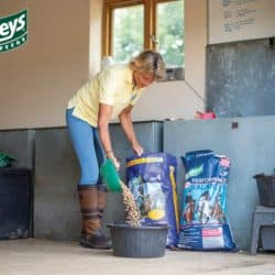 Feeding your horse with Baileys