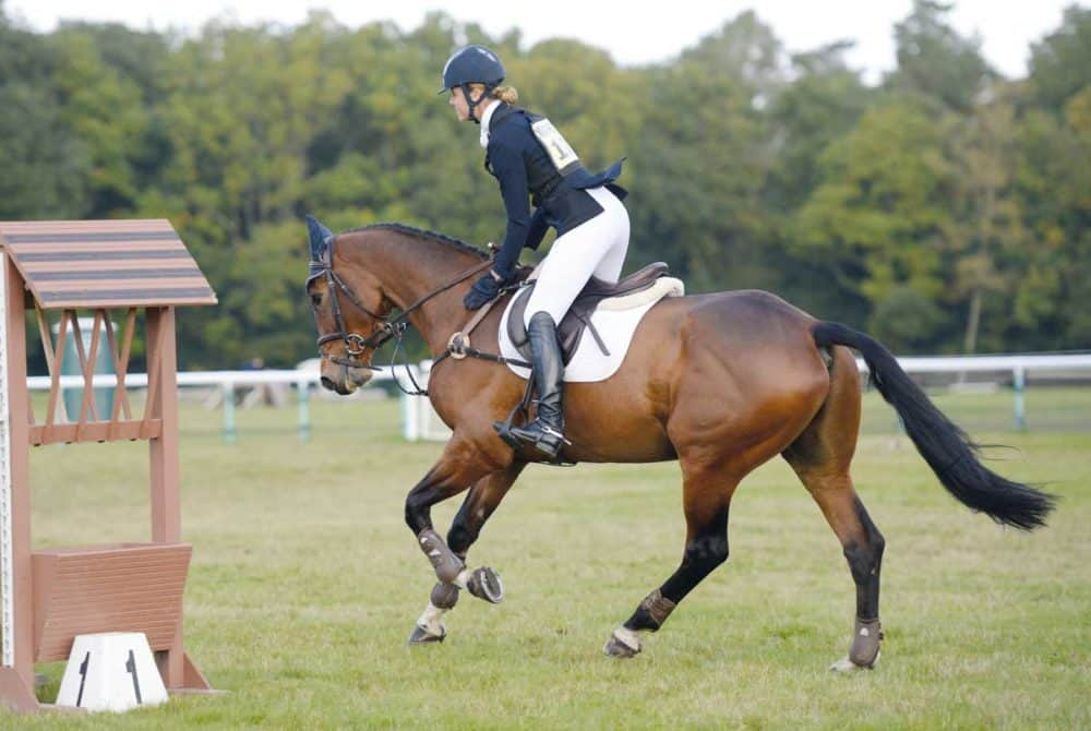 Horse and rider at a competition