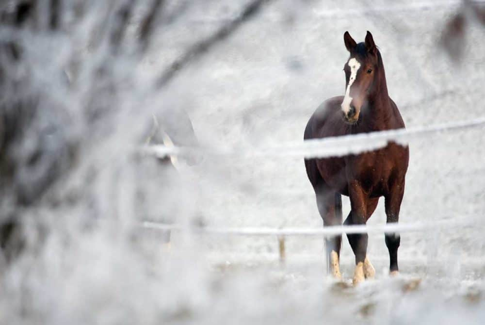 Winter riding with your horse