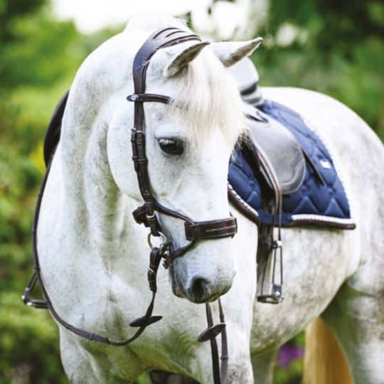 PS of Sweden High Jump bridle