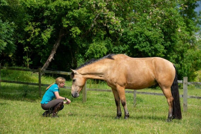 The latest coronavirus update for equestrians