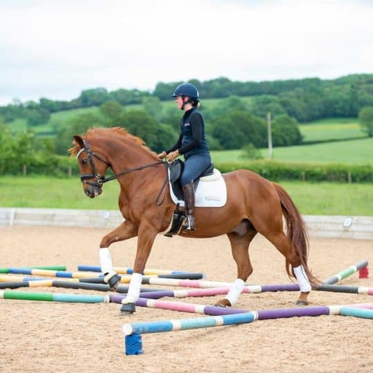 Horse and Rider polework