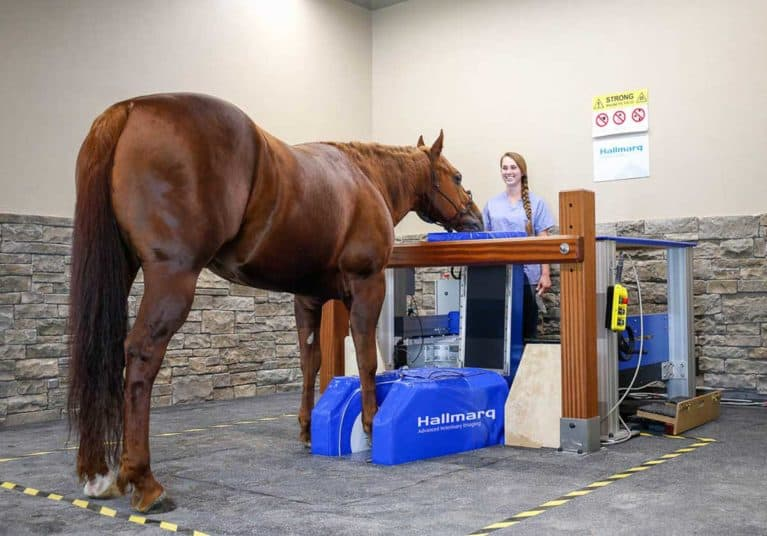 Hallmark equine MRI