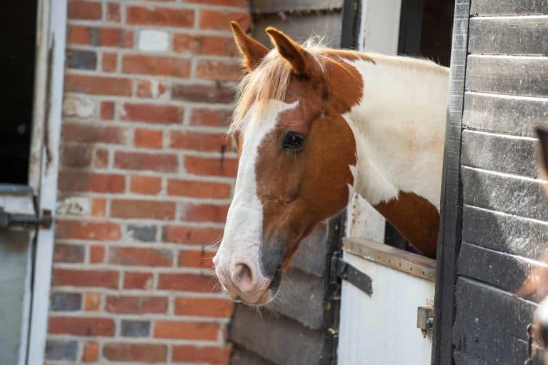 Horse with its head over the stable door