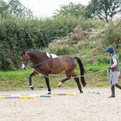 Lungeing exercises for your horse