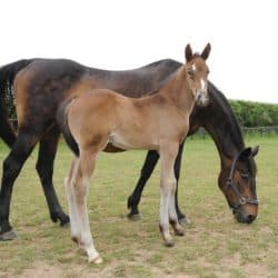 Mare and foal at a stud