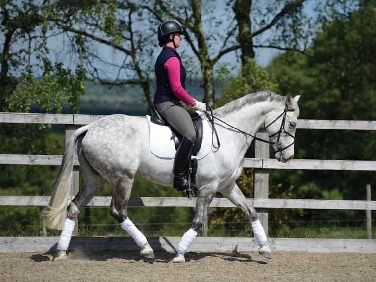 Rider doing sitting trot