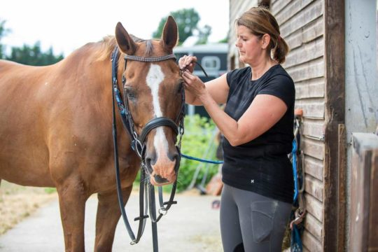 Horse having his bridle put on