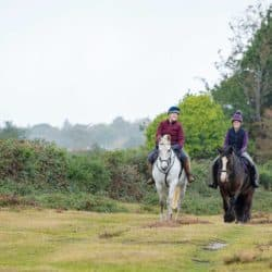 Two horses hacking