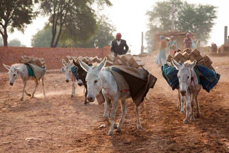 The Donkey Sanctuary in India
