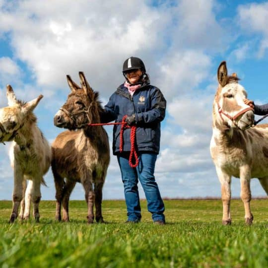 The Donkey Sanctuary rescues