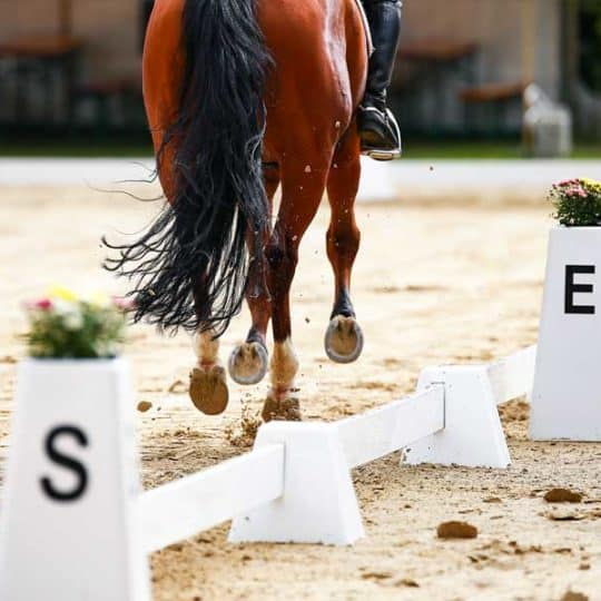 Dressage arena with horse