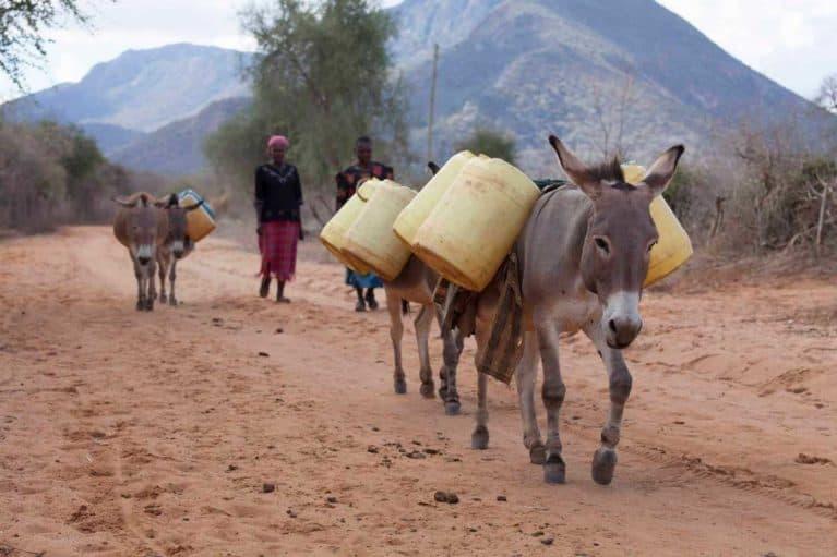 Donkeys gathering water