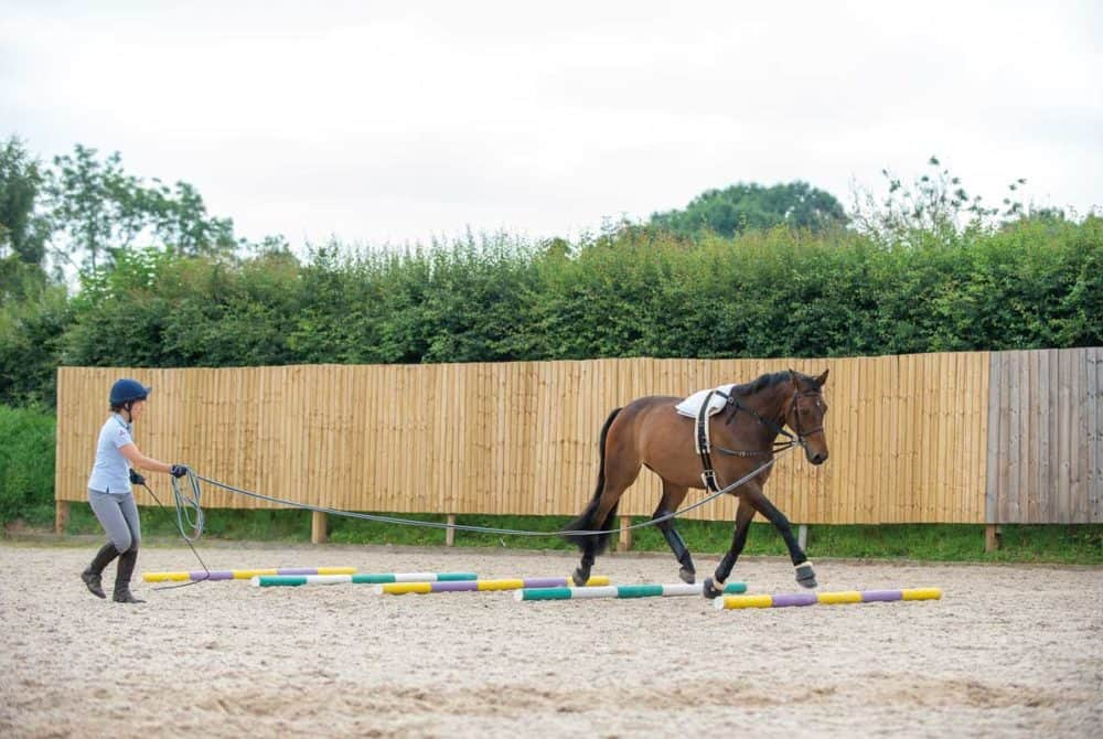Lungeing exercises