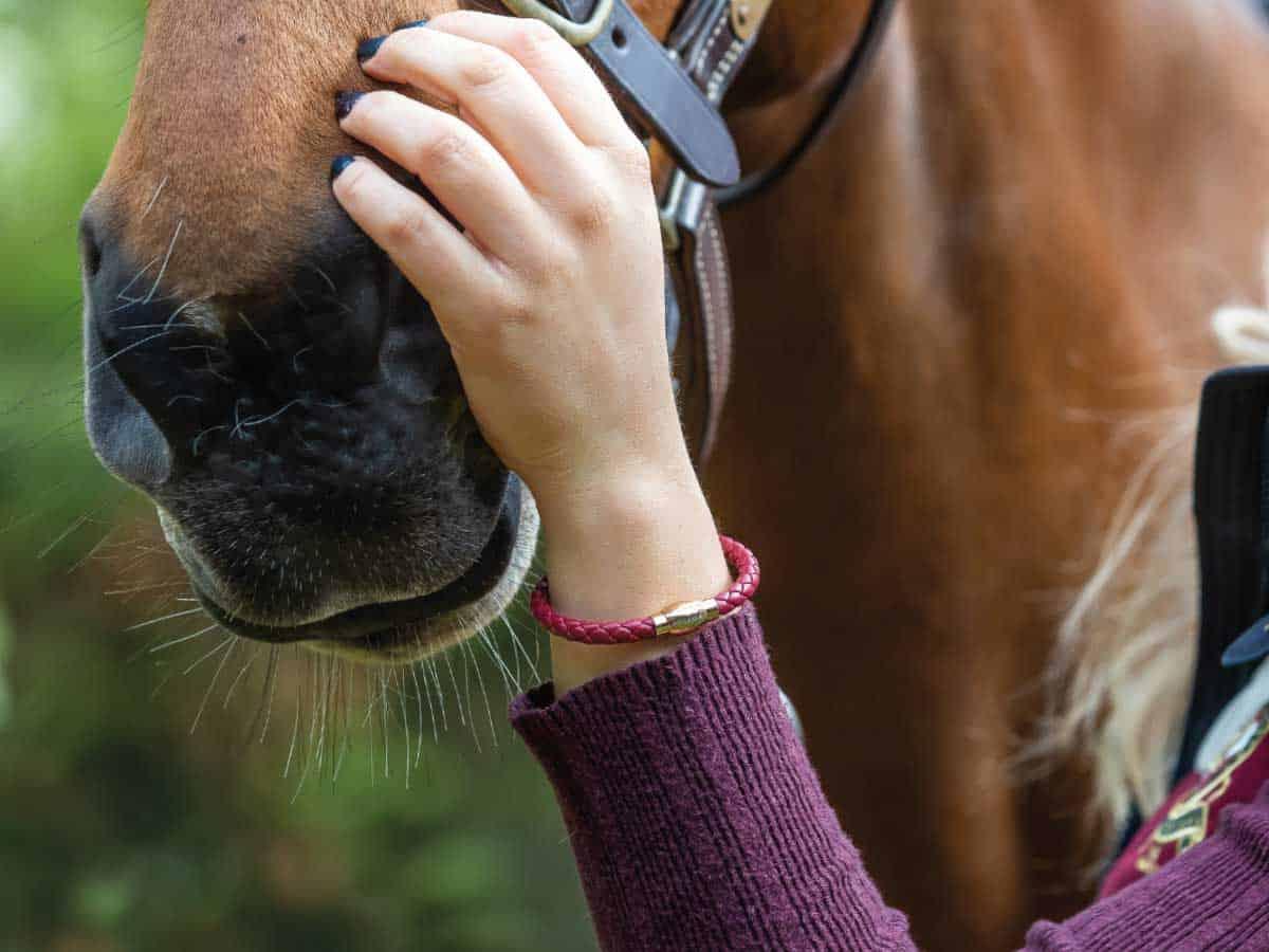 Pegasus Jewellery Vitality Hero bracelet