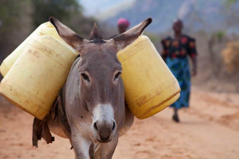 Working donkey carrying water