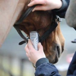 Clipping horse under jaw