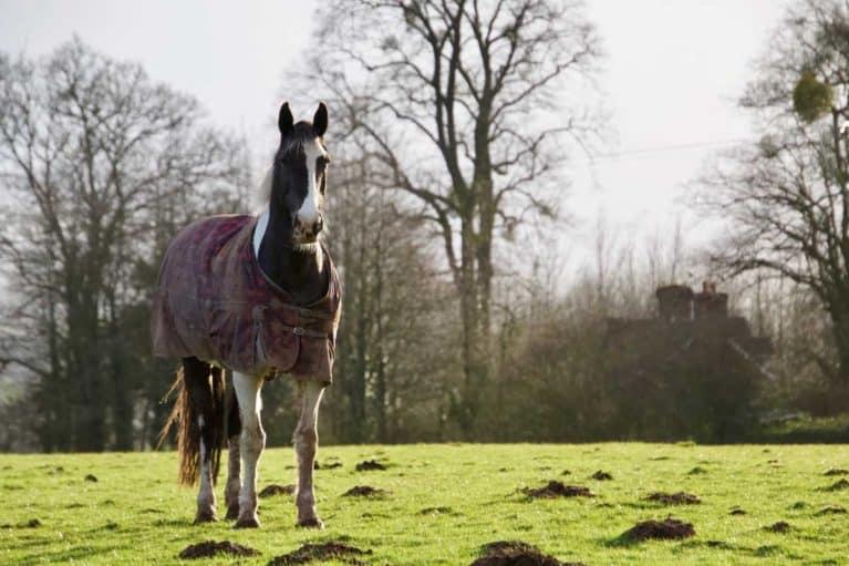 Horse in field wearing rug