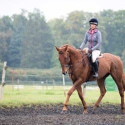 rider on chestnut horse