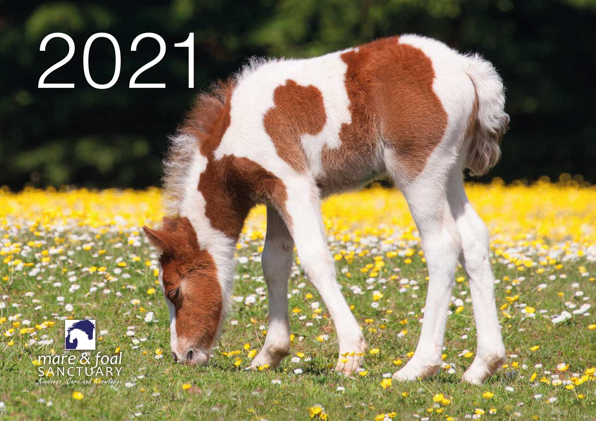 The Mare and Foal Sanctuary calendar