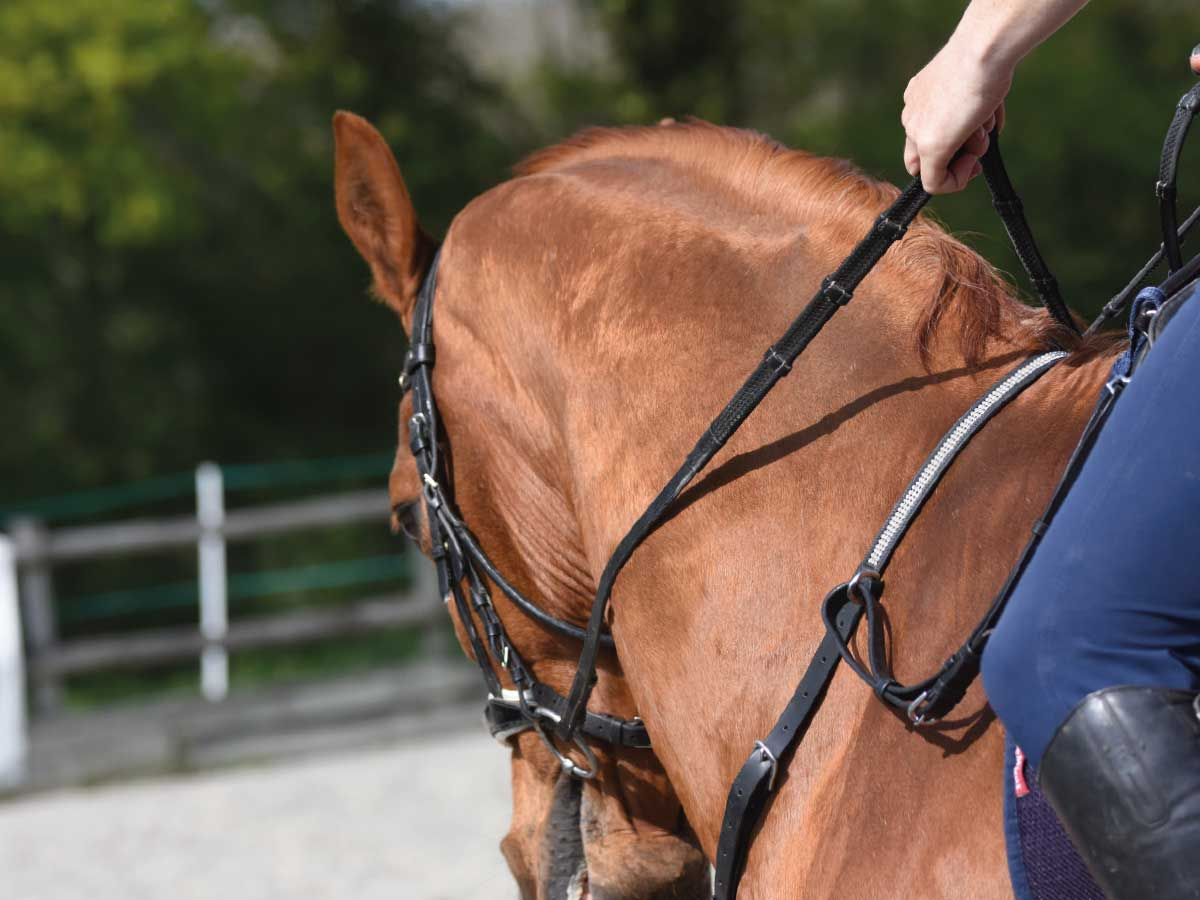 Salute Equestrian neckstrap
