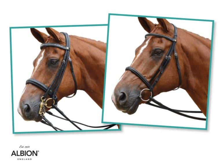 Win an Albion bridle