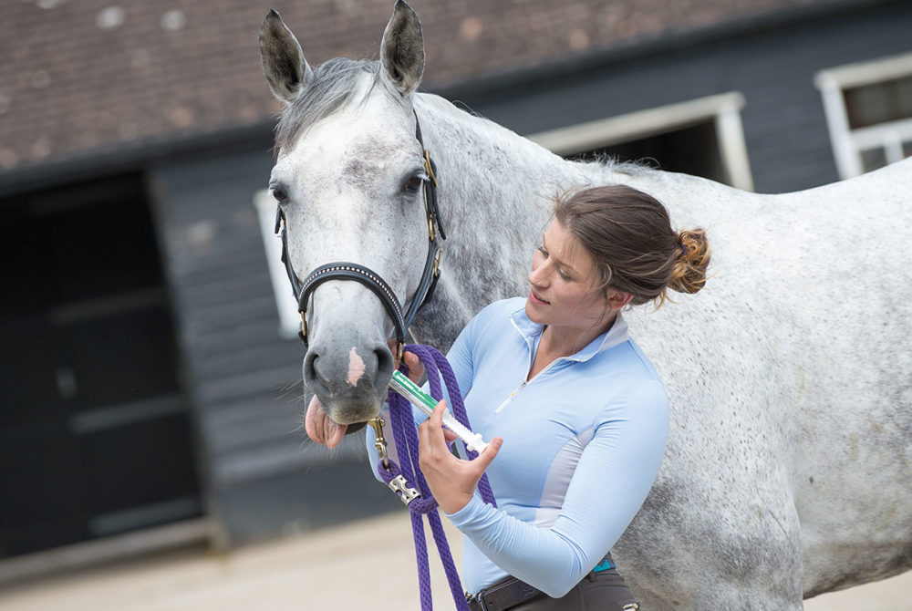 Worming a horse