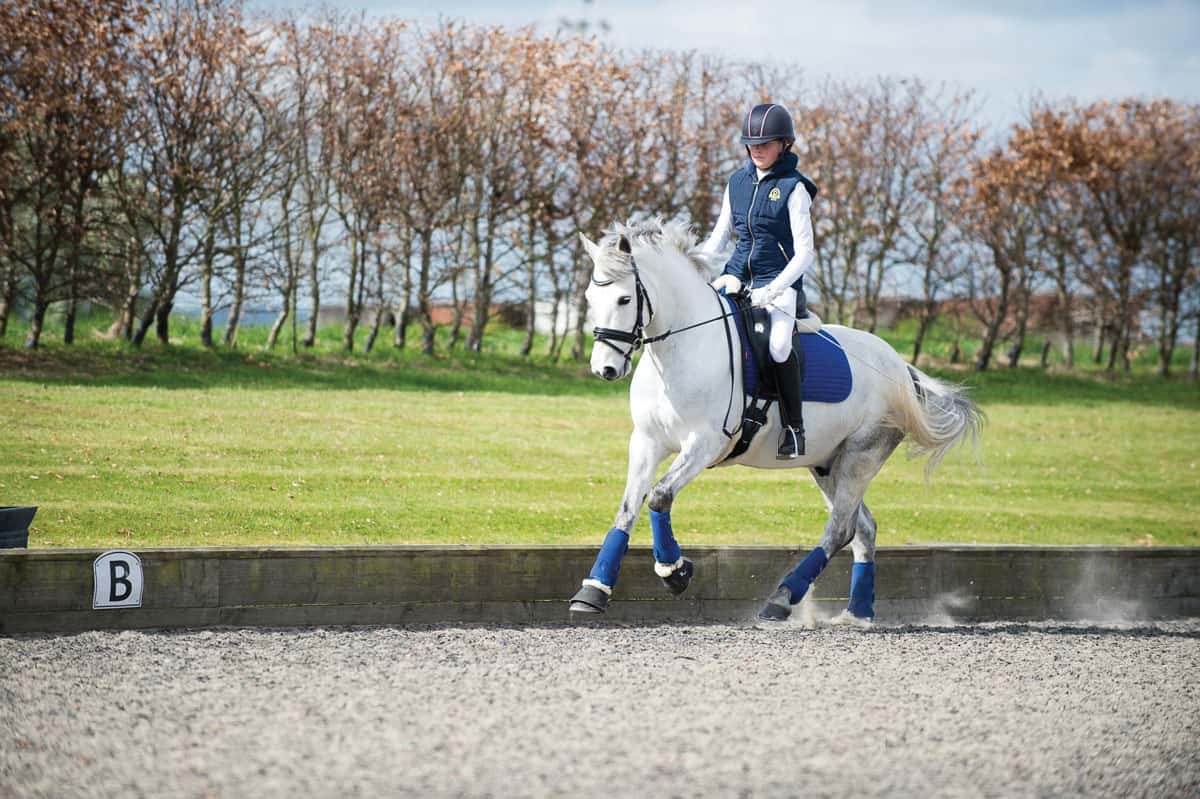 Schooling, horse cantering