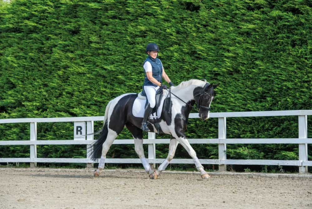 Schooling horse into a consistent contact