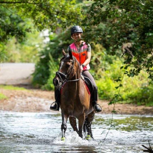 horse in streamq