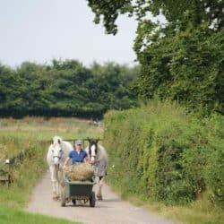Horses being brought in with wheelbarrow full of hay