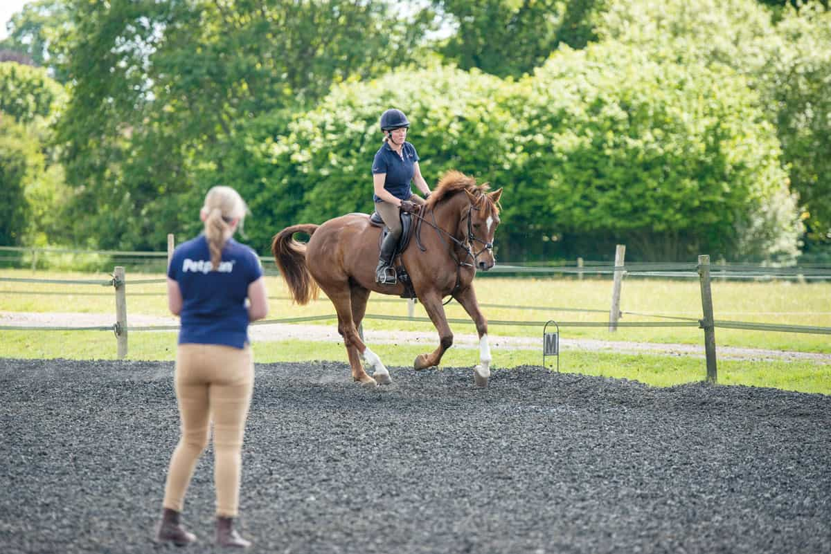 The stages of a horse vetting