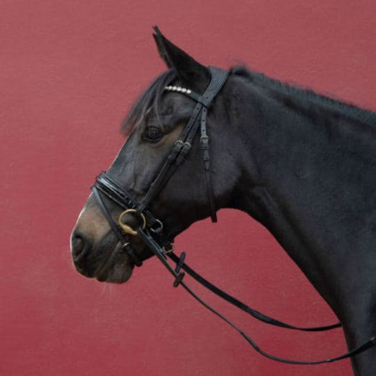 Ludford snaffle bridle