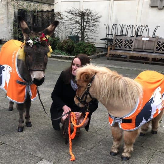 Alice with donkey and shetland