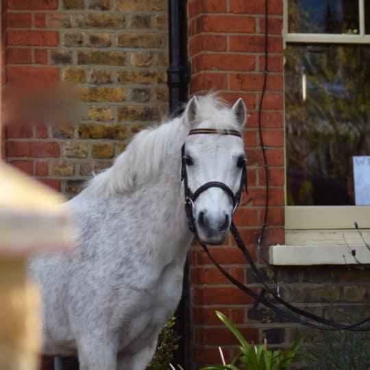 Equipassion pony