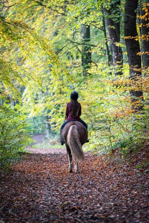 hacking-woodlands-horse