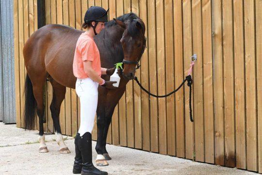 nervous-horse-training